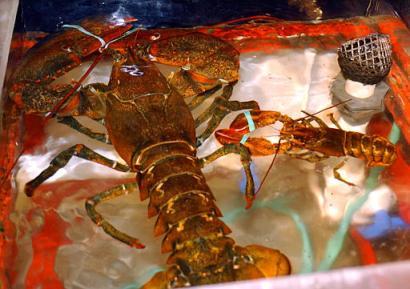Captpaks10203011906leviathan_lobster_pak